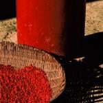 Rote Früchte Wutai Shan, Nordosten der Provinz Shanxi, China