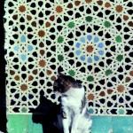 Palastkatze Marrakesch, Marokko