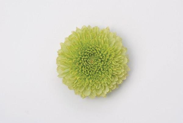 Galerie Edition Camos Flora | Erwin Geis