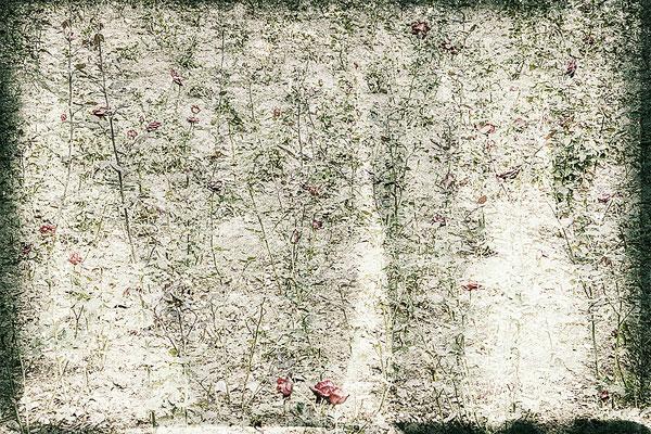 Edcamos | Raimund Feiter
