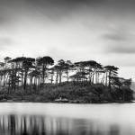 Tree Island, Ireland 2014